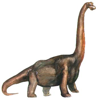 Long Neck Dinosaur - Brachiosaurus