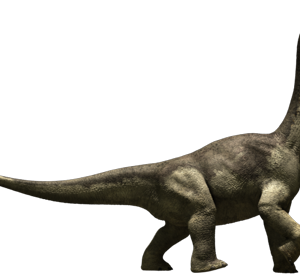 Long Neck Dinosaur – Camarasaurus