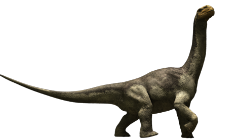 Long Neck Dinosaur - Camarasaurus