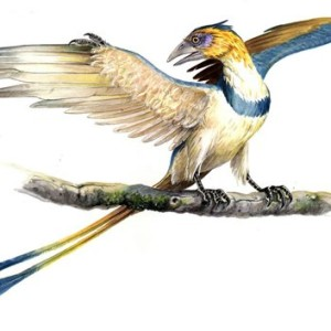 Flying Dinosaurs – Confuciusornis