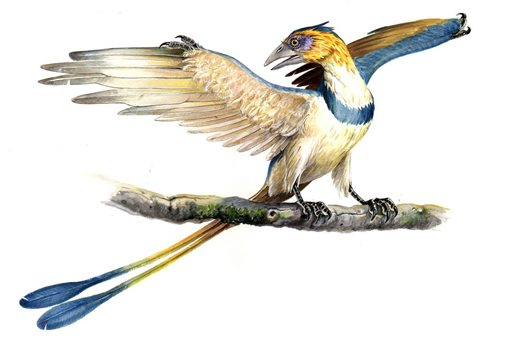 Flying Dinosaurs - Confuciusornis