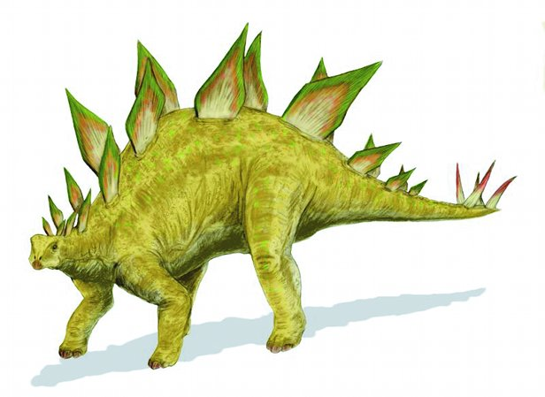 Stegosaurus Facts information