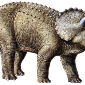 facts about triceratops for kids