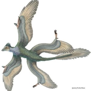 Flying Dinosaurs – Microraptor