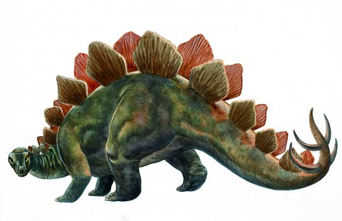 pictures of dinosaurs - Stegosaurus