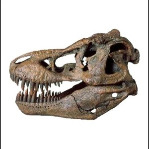 t-rex facts wikipedia