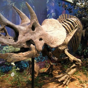3 interesting facts about triceratops