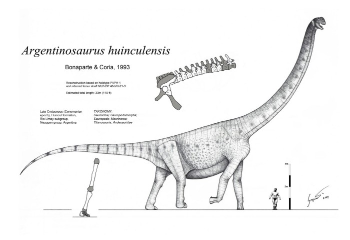 Argentinosaurus, The Largest DInosaurs