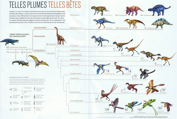 Dinosaur Evolution Sheets