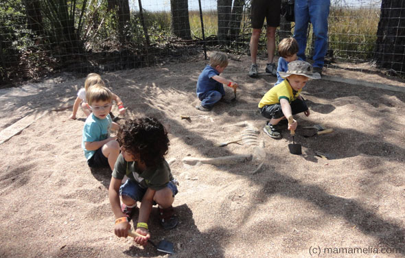 Fossil Dig Dinosaurs Lesson Plan