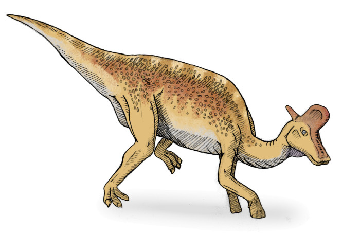 Duck Billed Dinosaur - Lambeosaurus