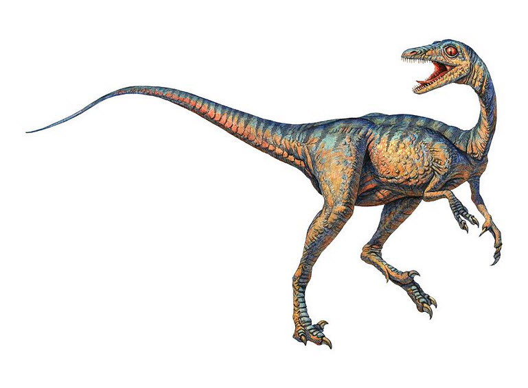 list meat eating dinosaurs : Troodon