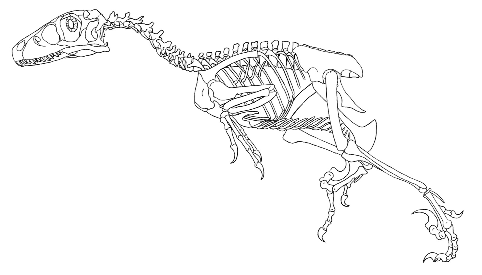 Deinonychus Skeleton coloring page