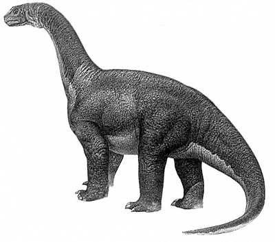 long neck dinosaur names – Camarasaurus