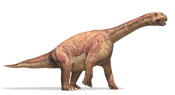 Camarasaurus Facts Sheets