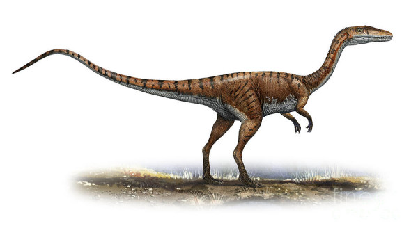 Coelophysis : The Fastest Dinosaur Ever