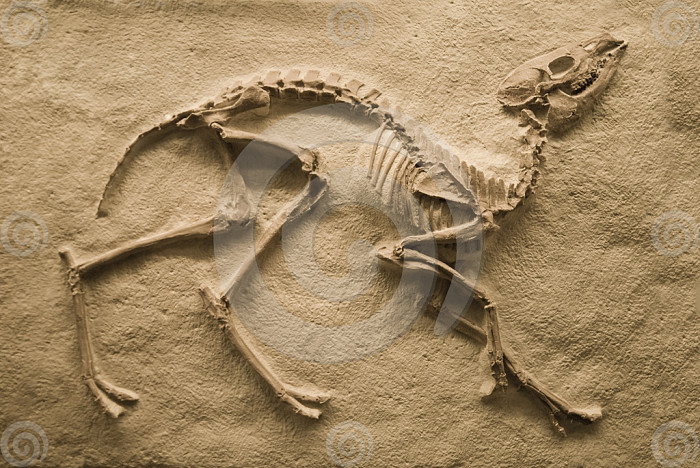 fossils of dinosaurs found around the world