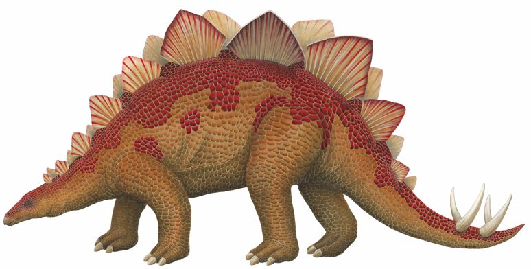 Stegosaurus Images for Kids