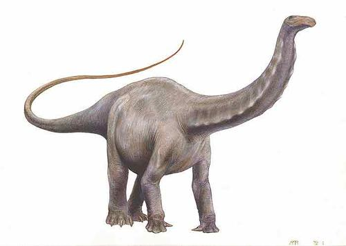 Dinosaurs that Eat Plants – Brontosaurus