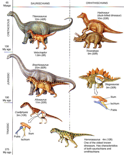 species of dinosaurs list