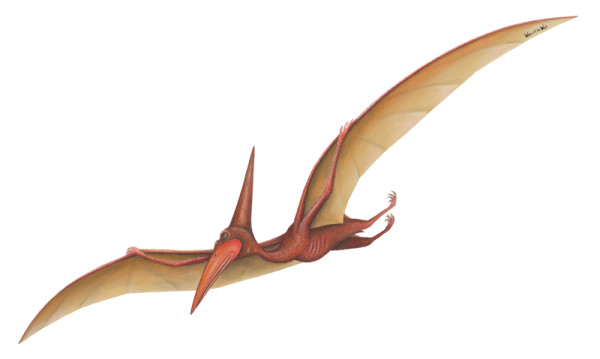 Type of Flying Dinosaur – Pterodactyl