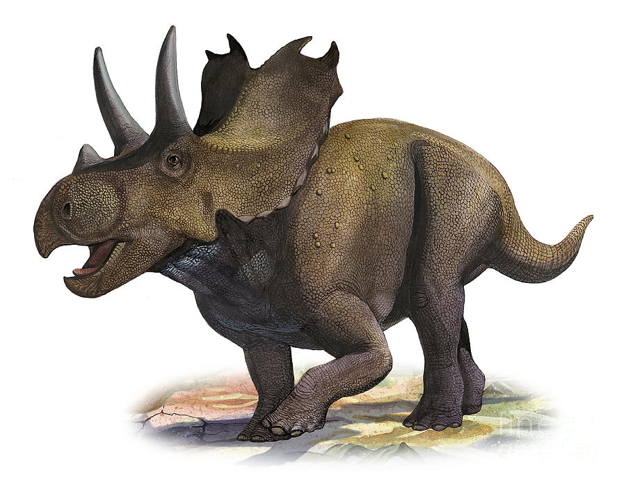 agujaceratops facts for kids