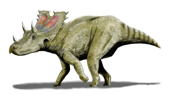 agujaceratops size