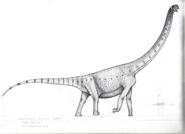 Coloring Pages of Argentinosaurus