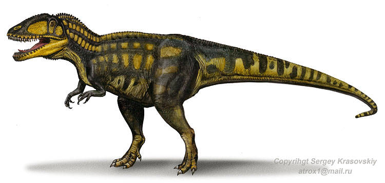Carcharodontosaurus Iguidensis Dinosaurs Pictures And Facts
