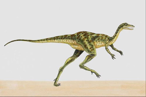 Coelurus facts for kids