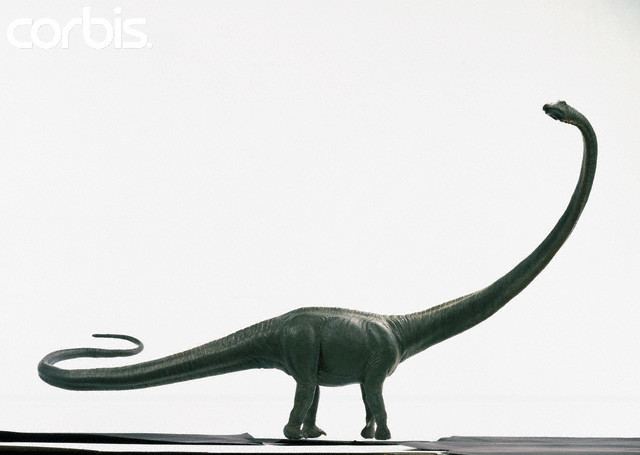 ... dinosaur. Just like another long-necked dinosaur, Barosaurus was a
