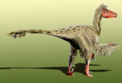 dromaeosaurus fun facts