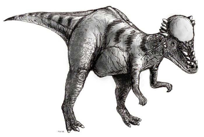 pachycephalosaurus facts for kids pachycephalosaurus interesting facts pachycephalosaurus wyomingensis facts pachycephalosaurus pictures