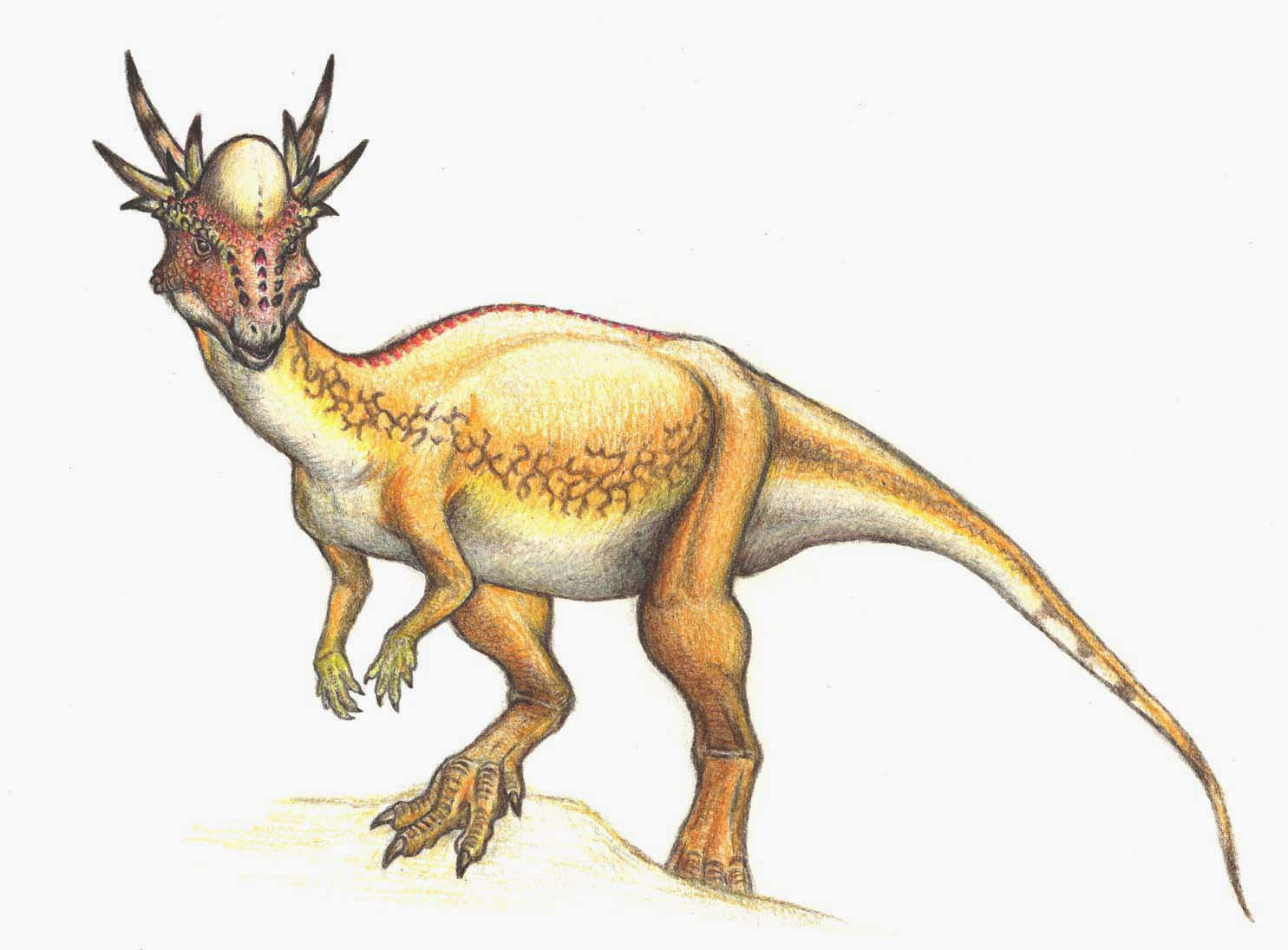 Stygimoloch Facts Dinosaurs Pictures and Facts
