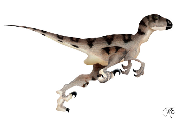Utahraptor facts for kid
