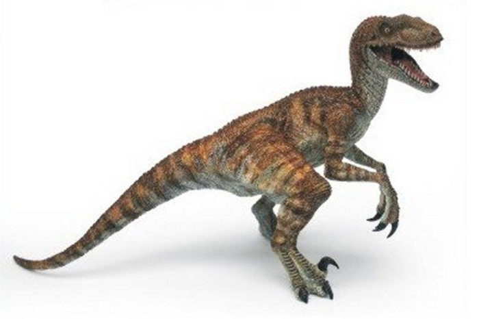 velociraptor facts and pictures