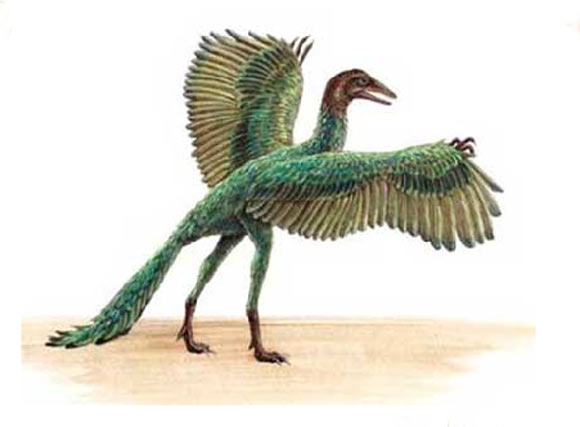 Archaeopteryx dinosaur facts