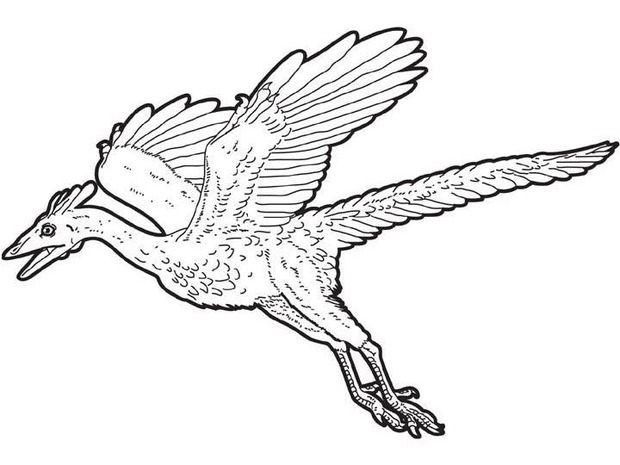 Archaeopteryx Flying Dinosaur Coloring Pages