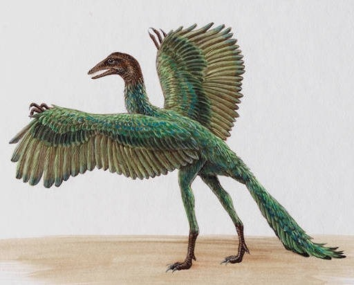 Archaeopteryx facts sheets