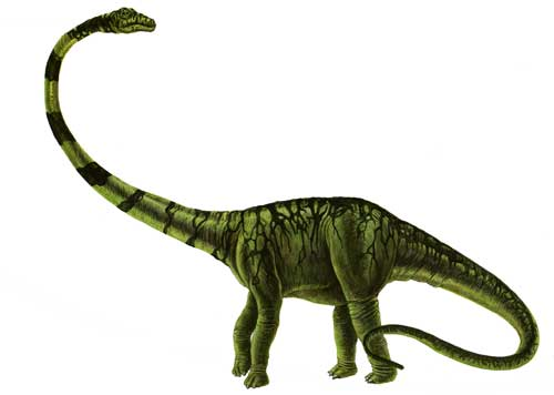 Barosaurus Facts for Kids