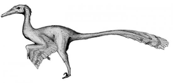 buitreraptor facts for kids