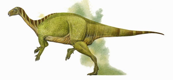 Camptosaurus Facts