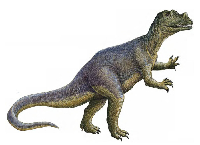 Ceratosaurus height