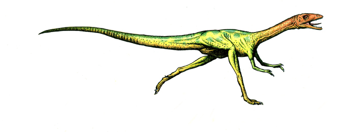 Compsognathus facts sheets