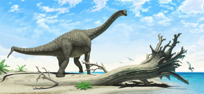 europasaurus height