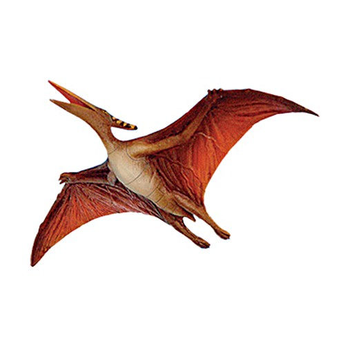 Type of Flying Dinosaur – Pteranodon