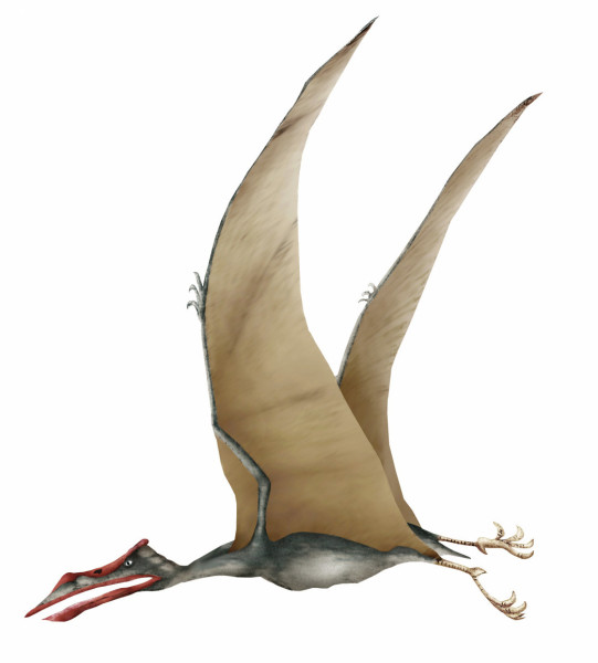 Type of Flying Dinosaur – Quetzalcoatlus