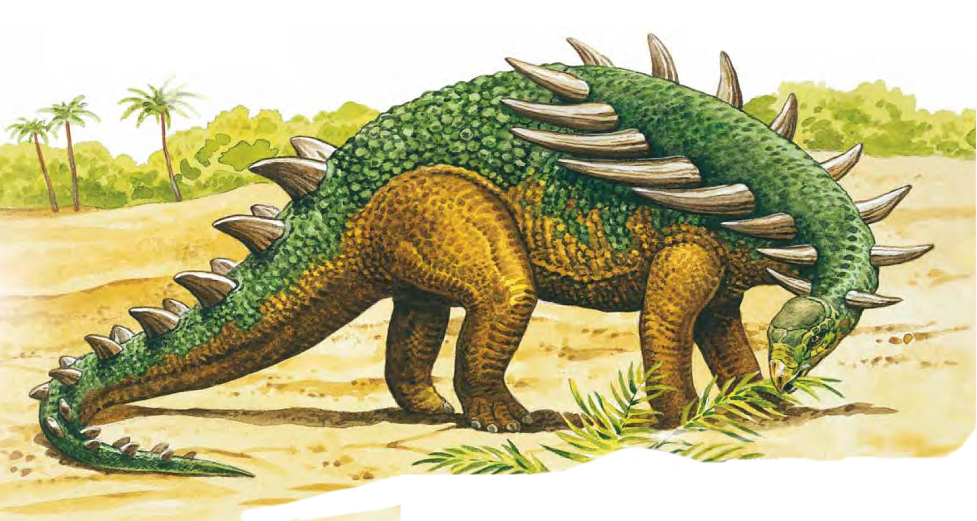 Polacanthus Facts Dinosaurs Pictures And Facts