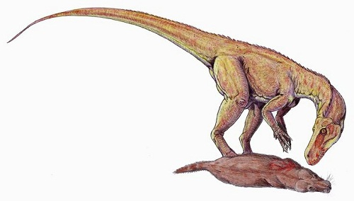 Alwalkeria Dinosaur Fact