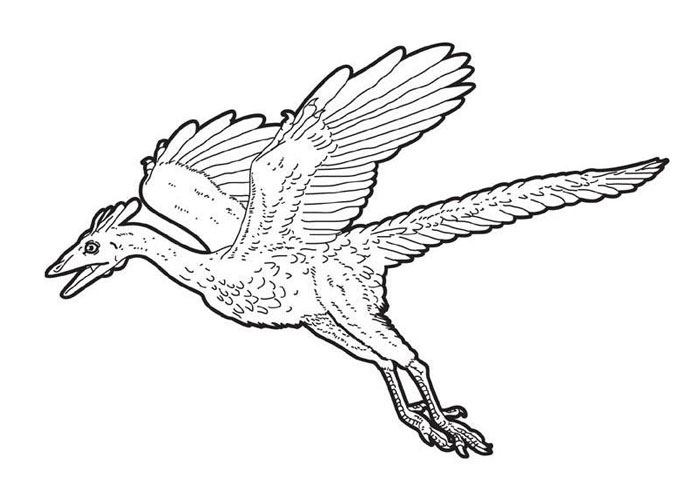 Archaeopteryx coloring page for kids